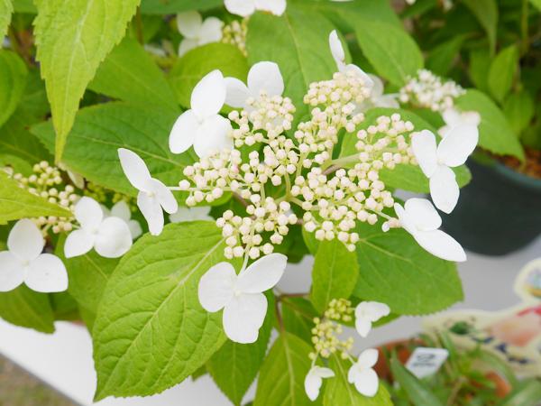 ガーデンに咲く花々