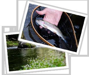 釣りもやっぱり高槻の芥川